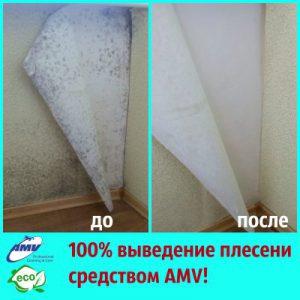 Чем вывести плесень на обоях и на стенах под обоями? Средством AMV!